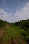 kashima08-21.jpg